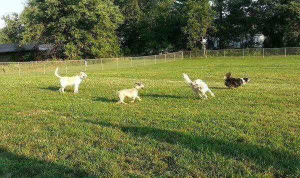 Fairfield Off-leash Dog Park